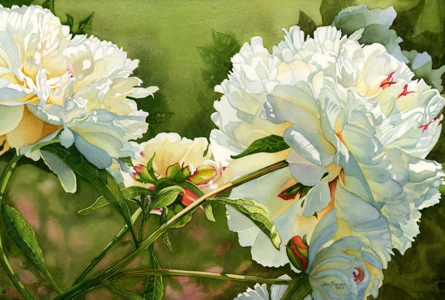 """Winter White Peony"" karya Jane Freeman"