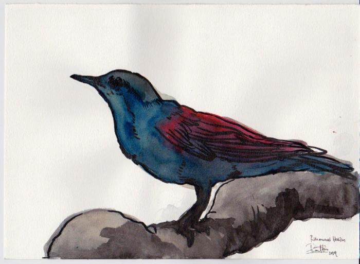 watercolor_hakim_01